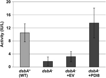 Alkaline phosphatase activity of E. coli dsbA − cells expressing the lumenal region of PDI8. PhoA activities were measured from cell lysates obtained from the dsbA + strain RI89 (wild-type; WT), the untransformed dsbA − strain RI90, and RI90 cells transformed with either the pFLAG-CTS empty vector (+EV) or the pFLAG-PDI8 abb' construct (+PDI8). The values are averages of three independent trials, with error bars representing standard deviations
