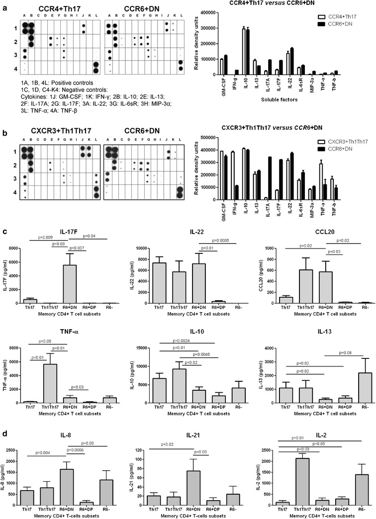 CCR6 + DN cells are a major source of IL-17F, IL-8, and IL-21. Culture supernatants harvested from Th17, Th1Th17, and CCR6 + DN (stimulated as in Fig. 1 e) isolated from the peripheral blood of HIV-uninfected individuals were screened for the expression of 34 T-helper lineage-specific cytokines using the Human Th1/Th2/Th17 Antibody Array C series (RayBiotec). a , b Shown are results from one experiment with matched Th17 versus CCR6 + DN and Th1Th17 versus CCR6 + DN subsets: membrane blot ( left panels ) and relative density quantification ( right panels ). Results are representative of experiments performed with cells from two different donors: c , d Levels of IL-17F, IL-22, CCL20, IL-10, IL-13, TNF-α, IL-8, and IL-21 were quantified by ELISA. Shown are results on matched Th17, Th1Th17, CCR6 + DN, CCR6 + DP, and CCR6 − samples from different individuals (n = 3–7, mean ± SEM). Paired t -Test p -values are indicated in the graphs