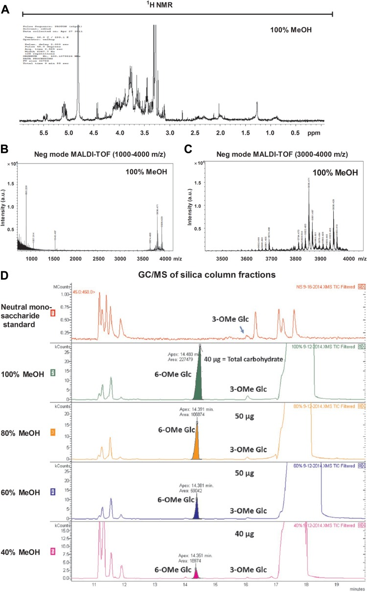 6- O -Methylglucose lipopolysaccharide (mGLP), a derivative or similar product thereof, is responsible for expansion of mycobacterium inhibition-specific γ 9 δ 2 T cells. The 100% MeOH fraction eluted from silica was further analyzed by 1 H NMR and MALDI-TOF. (A) 1 H NMR analysis of the 100% MeOH eluate was performed on 4.0 mg of material. NMR spectra revealed a significant presence of O -methyl groups and α-anomeric protons corresponding to hexosyl residues. A representative 100% MeOH fraction (1 μl) from a silica gel column loaded with H37Rv total lipid from the chloroform-methanol-water (10:10:3) extraction and eluted with an increasing methanol gradient was mixed with DHB matrix (1 μl) and analyzed in negative <t>electrospray</t> mode. Spectra revealed a high-molecular-mass product in the m/z range of 3,600 to 4,000 (B), with peaks separated by 14 amu (C). (D) GC-MS profile of silica gel column fractions from the chloroform-methanol-water (10:10:3) extract: (1) neutral monosaccharide standard, (2) 100% MeOH, (3) 80% MeOH-CHCl 3 , (4) 60% MeOH-CHCl 3 , and (5) 40% MeOH-CHCl 3 .
