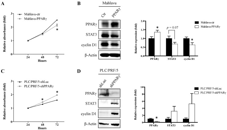 Effects of PPARγ overexpression and knockdown on cell proliferation and PPARγ downstream target protein expression in Mahlavu and PLC/PRF/5 HCC cells, respectively. ( A , C ) The cell proliferation rates of Mahlavu-ctr, Mahlavu-PPARγ, PLC/PRF/5-shLuc, and PLC/PRF/5-shPPARγ cells were analyzed by SRB assay; ( B , D ) the expression of PPARγ downstream target proteins STAT3 and cyclin D1 was analyzed by Western blot and the quantification results are shown. * p