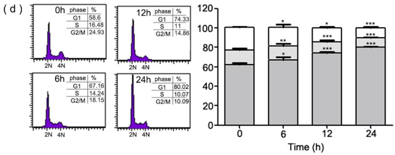 HMDB inhibited proliferation of HeLa cells via inducing the G1 cell cycle arrest. ( a ) The chemical structure of HMDB; and ( b ) the effect of HMDB on cell viability of HeLa cells. Cells were treated with a variety of dosages of HMDB for 0–24 h or ( c ) with 40 µM HMDB for different time periods. Cell survival was determined using 3-(4,5-dimethylthiazol-2-yl)-2,5-diphenyltetrazolium bromide (MTT) assay and trypan blue exclusion assays, respectively. The protein levels of PCNA were determined by Western blotting; and ( d ) a histogram of the cell cycle distribution. HeLa cells were treated with 40 μM HMDB for 0, 6, 12, and 24 h. Cell distribution at G1, S and G2/M phase was determined using flow cytometry. All of the data resulted from repeating independent experiments three times and results are expressed as mean ± SE. Values were statistically significant (versus HMDB treatment) for * p