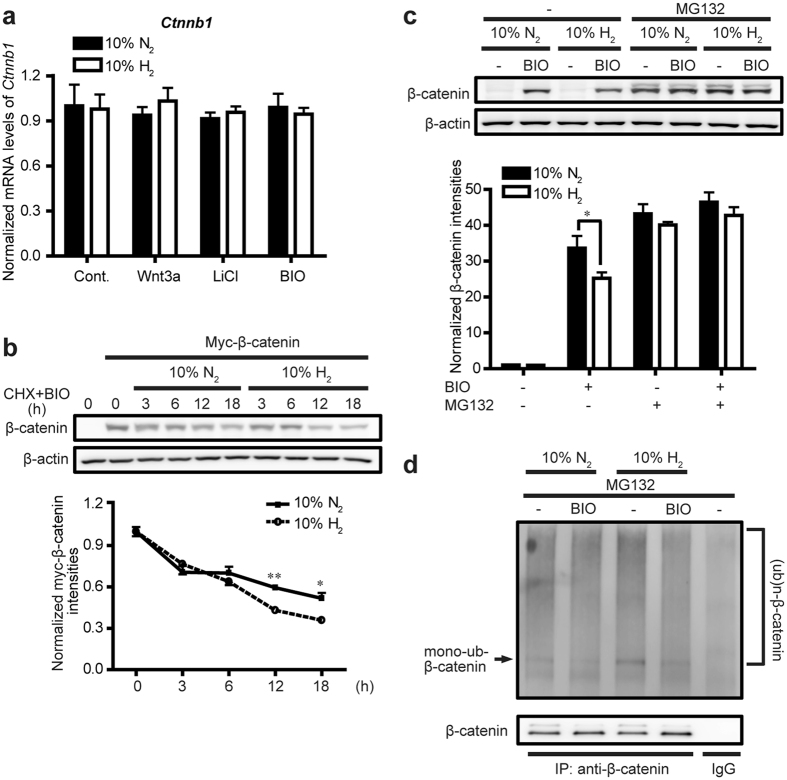 H 2 promotes β-catenin degradation in L cells. (a) Cells were treated with control CM (Cont.), Wnt3a CM, 30 mM <t>LiCl,</t> or 2 μM BIO with 10% H 2 or 10% N 2 gas for 24 h. Expression of Ctnnb1 encoding β-catenin was quantified by qRT-PCR ( n = 3). (b) Cells transfected with myc-β-catenin (XE28 XBC plasmid) were exposed to a combination of 10 μg/ml cycloheximide <t>(CHX)</t> and 2 μM BIO with 10% H 2 or 10% N 2 gas for indicated periods of time. Representative Western blots are shown with densitometry of myc-β-catenin/β-actin ( n = 4). Two groups were not statistically different by two-way repeated measures ANOVA. * P