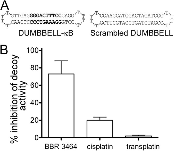 Differential inhibition of dumbbell decoy activity by DNA adducts of BBR 3464 as compared with cisplatin and transplatin in HEK293-NF-кB-luciferase reporter cell line. The percentage of inhibition of the specific decoy activity was calculated by measuring, for each experiment, the difference between luciferase activities obtained with cells transfected with platinated DUMBBELL-кB and nonplatinated DUMBBELL-kB divided by the difference between luciferase activities obtained with cells transfected with nonplatinated scrambled and specific (κB-site containing) DUMBBELL decoy oligonucleotides. Data represent the mean ± SD obtained from triplicate wells and are representative of at least three independent experiments. Data for ciplatin and transplatin were taken from ref. 10 .