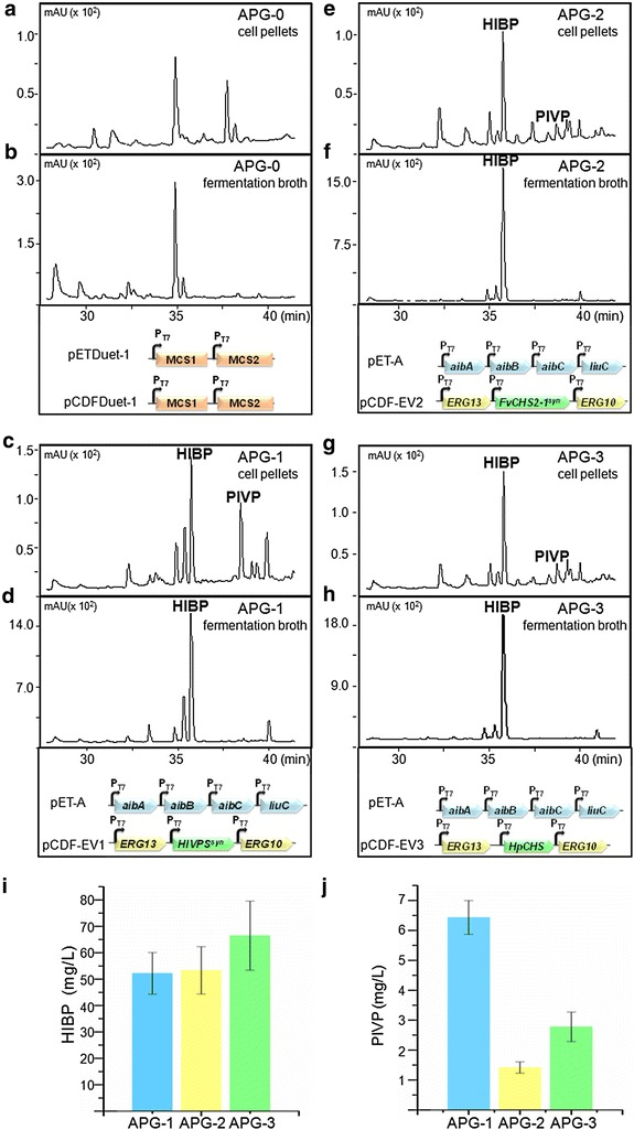 Engineered synthesis of 4-hydroxy-6-isovaleryl-2-pyrone (HIBP) and phlorisovalerophenone (PIVP) by E. coli strains. a , b Strain APG-0 harboring empty vectors as negative control. c , d Strain APG-1 harboring plasmids pET-A and pCDF-EV1. e , f Strain APG-2 harboring plasmids pET-A and pCDF-EV2. g , h Strain APG-3 harboring plasmids pET-A and pCDF-EV3. a , c , e , g HPLC analysis of metabolites extracted from cell pellets. b , d , f , h HPLC analysis of metabolites extracted from the fermentation broth. i The titers of HIBP produced by the strains APG-1, APG-2 and APG-3. j The titers of PIVP produced by the strains APG-1, APG-2 and APG-3