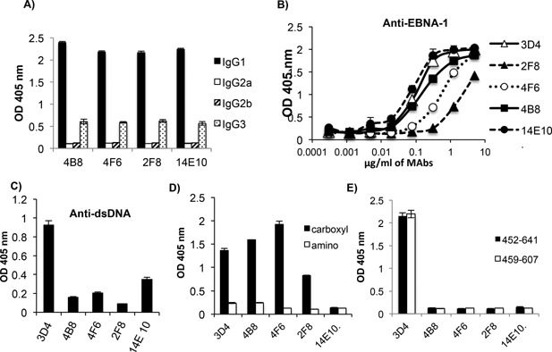 MAbs that bind to the carboxyl region of EBNA‐1 but do not cross‐react with dsDNA, recognize a different epitope than the cross‐reactive antibodies. (A) The IgG isotype of the non‐cross‐reactive MAbs 2F8, 14E10, 4F6, and 4B8 were determined by ELISA. (B) The non cross‐reactive MAbs, were tested by ELISA at a range of concentrations, for binding to EBNA‐1. 3D4 was used as the reference standard. MAbs were tested by ELISA for binding to dsDNA (C), to the amino and carboxyl regions of EBNA‐1 (D) and to two truncated carboxyl fragments; aa 452–641 and aa 459–607 (E). MAb concentrations used were 12.5 μg/ml in (C) and 1.25 μg/ml in (D) and (E). ELISAs are representative of two experiments. ELISA values were obtained in triplicate. Error bars represent the standard deviations of triplicates.