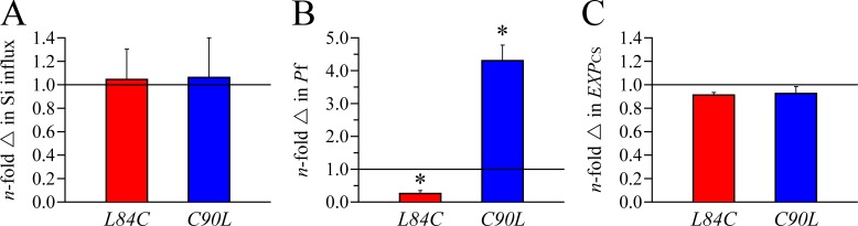 Transport characteristics and membrane expression of AQP1 L84C and AQP10 C90L . Experimental conditions were as described in Fig. 4 . Data expression is also as described in Fig. 4 . (A) Si influx. Data are expressed as means ± SE of 10 oocytes among three to six experiments. (B) Water permeability. Data are expressed as means ± SE of three to five oocytes among three to four experiments. (B) The asterisk is used to indicate that the mean is significantly different statistically (*, P