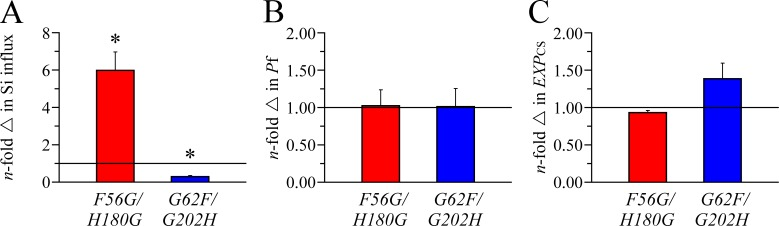 Transport characteristics and membrane expression of AQP1 F56G/H180G and AQP10 G62F/G202H . Experimental conditions were as described in Fig. 4 . Data expression is also as described in Fig. 4 . (A) Si influx. Data are expressed as means ± SE of 10 oocytes among eight to nine experiments. The asterisk is used to indicate that the mean is significantly different statistically (*, P