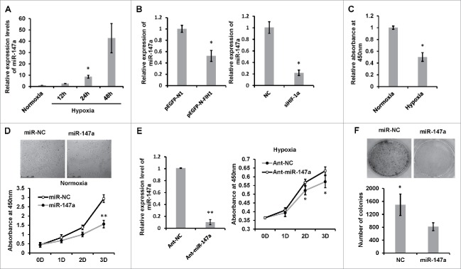 Hypoxia-induced miR-147 inhibits cell proliferation and colony formation. (A) Hypoxia induces miR-147a expression. HeLa cells were exposed to 1% oxygen for 12, 24 and 48 h; real-time PCR analysis of miR-147a levels in HeLa cells was done and compared with normoxia (21% O 2 ). U6 small nuclear RNA was used as an internal control. Data shown are mean ± SD of 3 independent experiments. *P