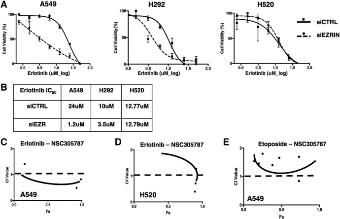 Ezrin knockdown sensitizes NSCLC cells to erlotinib treatment. MTT test was used to evaluate the cell viability. (A) Nonlinear curve fit and (B) IC 50 values of control siRNA (siCTRL)– and siEZR-treated A549, H292, and H520 cells are given. Reduced ezrin expression caused a decreased IC 50 value for erlotinib in A549 and H292 cells compared with H520 cells. (C) Ezrin inhibitor NSC305787 shows synergism with erlotinib in A549 cells. No synergy was observed in H520 cells treated with erlotinib-NSC305787 combination (D) and in A549 cells treated with etoposide-NSC305787 combination (E).