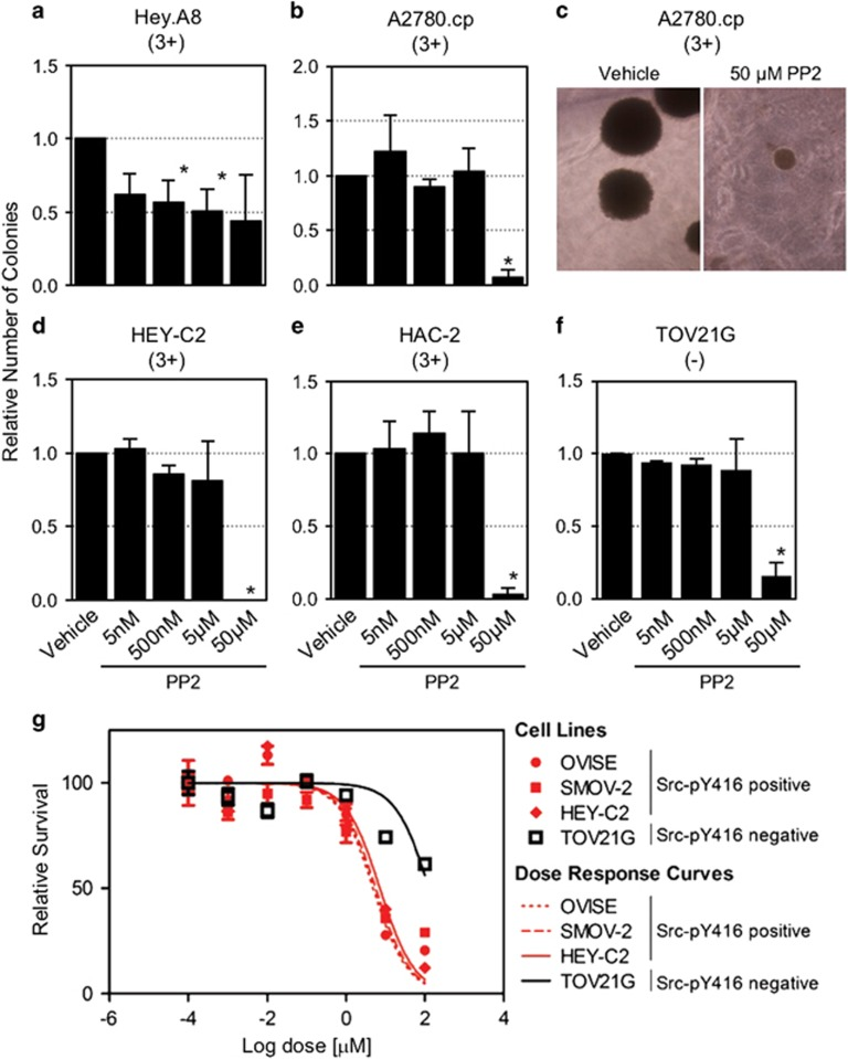 In vitro inhibition of Src signaling in anchorage-independent and anchorage-dependent growth assays. ( a–e ) Relative number of colonies in ( a ) Hey.A8, ( b , c ) A2780.cp, ( d ) HEY-C2, ( e ) HAC-2 and TOV21G cell lines. ( c ) Representative A2780.cp colonies in cultures treated with vehicle or 50 μ m <t>PP2</t> are shown. Data shown are mean±s.d. of three independent experiments. ( g ) Three Src-pY416-positive and one Src-pY416-negative cell line were assayed for anchorage-dependent growth when treated with PP2. Cells were cultured in the presence of PP2 for 7 days.