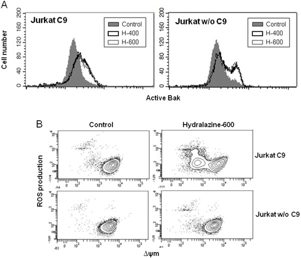 Induction of mitochondrial events by hydralazine in caspase-9 deficient cells A. Bak activation was analyzed by flow cytometry in caspase-9-deficient (Jurkat w/o C9) and caspase-9-reconstituted (Jurkat C9) Jurkat cells after treatment without (control) or with 400 and 600 μM hydralazine (H-400 and H-600, respectively) for 24 hr. B. Mitochondrial membrane potential and ROS production were determined by flow cytometry in caspase-9-deficient (Jurkat w/o C9) and caspase-9-reconstituted (Jurkat C9) Jurkat cells treated without (control) or with 600 μM hydralazine for 24 hr.