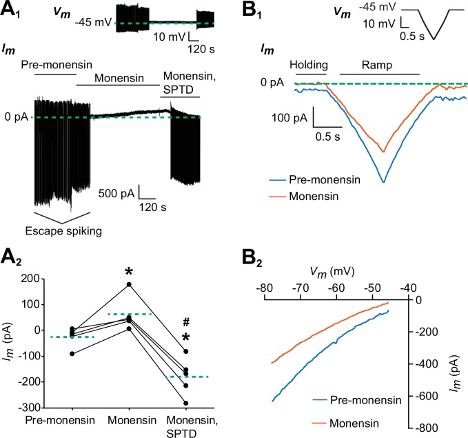 Monensin stimulates the outward Na + /K + pump current. ( A 1 ) Membrane current trace from an oscillator heart interneuron with its membrane potential ( V m ) voltage-clamped at −45 mV (see inset) in Ca 2+ -free saline with 1.8 mM Mn 2+ plus 2 mM Cs. Changes in the neuron's membrane current ( I m ) were observed under three experimental treatments: pre-monensin saline for five minutes, 10 µM monensin for 10 min, and 10 µM monensin plus 100 µM strophanthidin (SPTD) for another five minutes. ( A 2 ) A scatterplot of membrane currents from five preparations, with each green dashed line representing a mean for each of the three experimental treatments. Monensin induced a significant outward current relative to pre-monensin saline. Monensin plus strophanthidin induced a significant inward current relative to pre-monensin or monensin saline. The asterisks (*) represent significance from the pre-monensin saline whereas the hashtag (#) represents significance from the monensin saline (Tukey's test, p