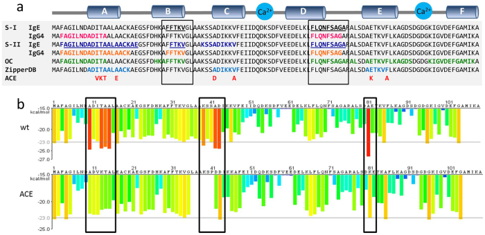 Location and relation of the immunoreactive and amyloid forming regions in the Gad m 1 chain ( a ) Sequence and location of the following regions in the Gad m 1 chain: ?(i) IgE-binding epitopes found in sera groups S-I (black and underlined) and S-II (navy blue and underlined), (ii) IgG4-binding epitopes found in S-I (pink) and S-II (orange), (iii) OC-binding segments (green), (iv) adhesive regions identified by the ZipperDB algorithm (light blue), and (v) sequence changes in the A, C and E regions (red). The sequence changes were based on the sequences of the following β-parvalbumins: (i) Q91482, Q90YK8 and E0WDA2 for A, (ii) Q90YL0, Q91482, Q91483, E0WDA2 and Q90YK8 for C, and (iii) C6GKU7 for E 36 . (b) Comparative ZipperDB analysis of the Gad m1 wt and ACE mutant chains. Red bars indicate the N-terminus of a hexapeptide with adhesive properties. The effects of the adhesive segments are depicted by rectangles and were conserved in the analysis of chains containing single A, C and E modifications.
