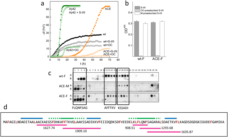 Gad m 1 sequences that are recognized by IgE in patient sera display amyloid folds. (a) The effects of patient sera (S-I/II) and the anti-amyloid OC antibody on the amyloid formation kinetics of rGad wt (black), its ACE mutant (orange) and Aβ42 (green) were monitored by ThT-binding in 50 mM Tris-HCl, pH 7.5, containing 0.1 M NaCl and 5 mM EDTA. (b) Effects of the anti-amyloid OC antibody and Gad m 1 monomers on recognition of the wt and ACE amyloid fibrils by the IgE in patient sera, as determined by the ELISA assay. Amyloid fibrils (100 ng/well) were probed with the patient sera pool that had been pre-adsorbed with 1 μg of BSA (S-I/II), 1 μg of OC (OC-preadsorbed S-I/II) and 1 μg of the corresponding monomer chain (M-preadsorbed S-I/II). (c) Gad m1 peptide arrays were probed with amyloids (wt-F and ACE-F) and monomers (ACE-M) and developed with the anti-His tag antibody to detect binding. (d) Sequence coverage of rGad m 1 wt obtained by LC-MS/MS analysis of the peptide mixture after pepsin digestion of the amyloids. The pepsin cleavage sites are displayed in red, the predicted adhesive regions are shown as blue lines, and the IgE binding regions are indicated with green lines (solid in the common core, dotted for all peptides). The sequences of the overlapping IgE-binding regions in the peptides are depicted in pink and their mass/charge ratio (m/z) is indicated nearby.