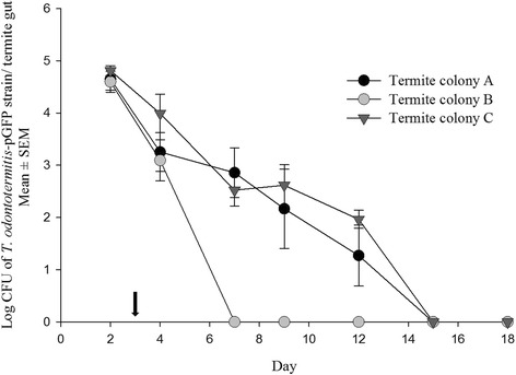 Number of T. odontotermitis -pGFP cells recovered from the gut of the termites of three different colonies after feeding for 2 days on cellulose discs containing T. odontotermitis -pGFP. The arrow indicates the day when the termites were moved to a sterile diet. The experiment had three replicates for each colony and 200 worker and 20 soldier termites were used for each replicate. Error bars indicate Standard Error of Mean (SEM)