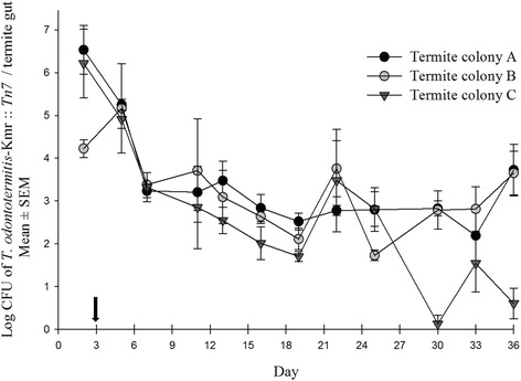 Number of Kanamycin resistant T. odontotermitis -Km r :: Tn7 recovered from the gut of the termites of three different colonies. The arrow on the X-axis indicates the day when termites were moved to a sterile diet. The experiment had three replicates for each colony and 200 worker and 20 soldier termites were used for each replicate. Error bars indicate Standard Error of Mean (SEM)