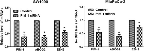 PIM-1 downregulation decreased the expression levels of cancer stem cell markers in pancreatic cancer. qRT-PCR was used to detect the mRNA expression levels of the indicated cancer stem cell markers. GAPDH was used as an internal control. The data are displayed as the mean ± SD (*, P