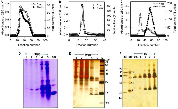 Purification profile of trypsin-specific PIs (CpPI 63), Gelatin native PAGE, and Tricine SDS-PAGE . Elution profile of (A) DEAE-cellulose column loaded with 20–70% (NH 4 ) 2 SO 4 fraction; (B) <t>trypsin-Sepharose</t> 4B column loaded with PI fraction (No. 20–63) pool from the ion-exchange column; (C) Sephadex G-50 column loaded with PI fraction (No. 12–18) pool from the affinity column; (D) activity staining of Gelatin native PAGE (12.5%) and; (E) Tricine SDS-PAGE (18%) showing different fractions of the purification protocol. Lanes 1-6 are loaded with crude PI protein extract, 20–70% (NH 4 ) 2 SO 4 protein fraction, active fraction pool against trypsin from anion exchange column, affinity column, gel-filtration column (fraction No. 38–73), Marker protein, soybean BBI (2 μg) or Puregene molecular weight marker, respectively. Gels were stained with CBB R250 stain or silver nitrate; (F) Tricine SDS-PAGE (18%) showing the consequent increase in intensity of PI bands and appearance of their oligomers with the progressive increase in concentration of CpPI 63 (lanes 3–7). Lanes 1 and 2 are loaded with molecular weight marker (Puregene) and soybean BBI (2 μg), a PI marker, as the mobility of PIs is known to vary as compared to other proteins. The molecular mass of monomeric (8 kDa), dimeric (16 kDa), and trimeric (24 kDa) forms of BBI is indicated. An additional band at ~19 kDa might be a contamination of Kunitz inhibitor in BBI preparation, which is procured commercially. The data shown here are representative of a purification protocol for CpPI 63 from four experiments performed independently as described in Table 1 .