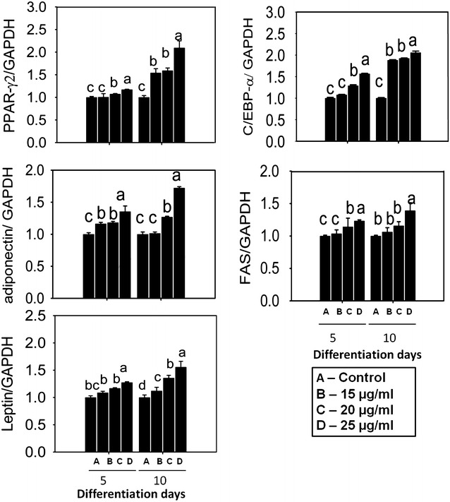 Impact of EECV on adipogenic and lipogenic mRNA expression quantified by qPCR. EECV treatment increased PPAR-γ2, C/EBP-α, adiponectin, FAS and leptin mRNA expression in a dose dependent manner on the 5th and 10th day of differentiation. The results represent the mean ± SEM of six replicates. Different letters a , b , c , d , within a treatment indicates significant differences (p