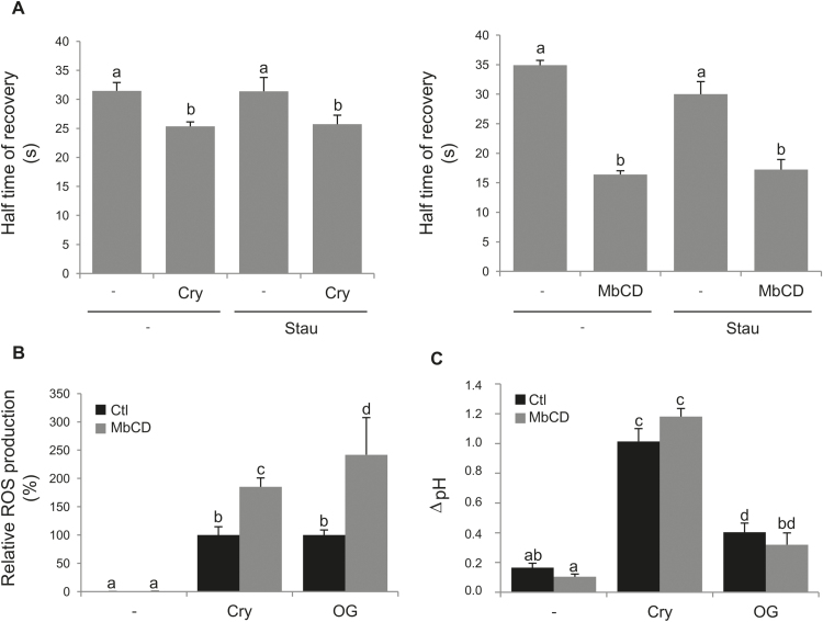 Sterol trapping enhances ROS production induced by the elicitation signalling cascade. (A) Fluidity is enhanced by sterol depletion. Half-maximal time of fluorescence recovery was measured by FRAP experiments after sterol depletion (5min of a 50nM cryptogein elicitation, cry, or 15min of a 5mM methyl-β-cyclodextrin treatment, MβCD) and/or phosphorylation inhibition (by a 5min incubation with 2.5mM staurosporin, Stau). (B and C) Early events of the signalling cascade were measured in control conditions (no addition in the medium, –) and after elicitation treatment with either 50nM cryptogein (Cry) or 50ng ml −1 oligogalacturonides (OG). A pre-incubation with (grey histogram) or without (black histogram) 5mM MβCD was performed to evaluate the effect of sterol trapping on these parameters. (B) ROS production measurement. The sum of the ROS production during the first 60min was measured by chemiluminescence and reported relative to the elicitor-induced treatment value (without sterol depletion). (C) pH alkalinization was evaluated after 30min of MβCD treatment. Mean values ±SEM ( n > 5 experiments). Letters indicate a significant difference between treatments ( P -value
