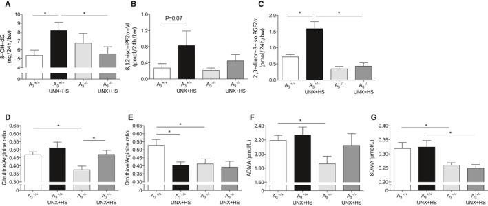 Plasma markers of oxidative stress and nitric oxide synthase activity. Urinary excretion of the oxidative stress markers 8‐ OH ‐ dG (A), 8,12‐iso‐ iPF 2α‐ VI (B), and its metabolite 2,3‐dinor‐8‐iso iPF 2α (C) were increased in A 3 +/+ mice after UNX in combination with HS ( UNX ‐ HS ) but were not significantly changed in the A 3 −/− mice. UNX ‐ HS caused significant increase of plasma citrulline/arginine ratio in A 3 −/− mice (D) and significant reduction of plasma ornithine/arginine ratio in A 3 +/+ mice only (E). Baseline levels of both citrulline/arginine and ornithine/arginine ratios were lower in the A 3 −/− mice compared with A 3 +/+ mice. A 3 −/− mice had significantly lower plasma ADMA and SDMA levels (F and G). Although UNX ‐ HS did not influence circulating ADMA and SDMA levels, the SDMA level after UNX ‐ HS was significantly lower in A 3 −/− compared with A 3 +/+ mice. Data are shown as mean± SEM , * P