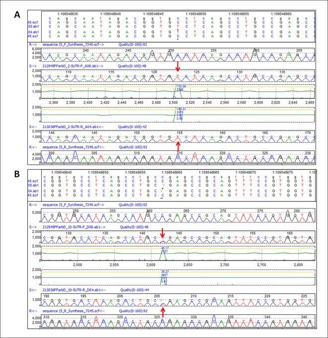Validation of <t>HaloPlex</t> SNVs in the 5' UTR of GNAI3 by Sanger Sequencing. A. Homozygous SNV (c.-72C > T) of Patient 2. At the top of the Figure the track annotation panel shows the Chr1 location of the C > T variant at position 109548649. Next, the forward sequences of the reference (R) and test sample (S) are shown, followed by the confidence score of the peak corresponding to the variant. From the bottom up, the reverse sequences of the reference and test sample peak profiles and the confidence score demonstrate the same variant. The red arrows point to the mutated nucleotide. B. Heterozygous SNV (c.-61C > T) of Patient 10. Same as A, except for the track annotation panel, which shows the C > T SNV at position 109548660 in Chr1.