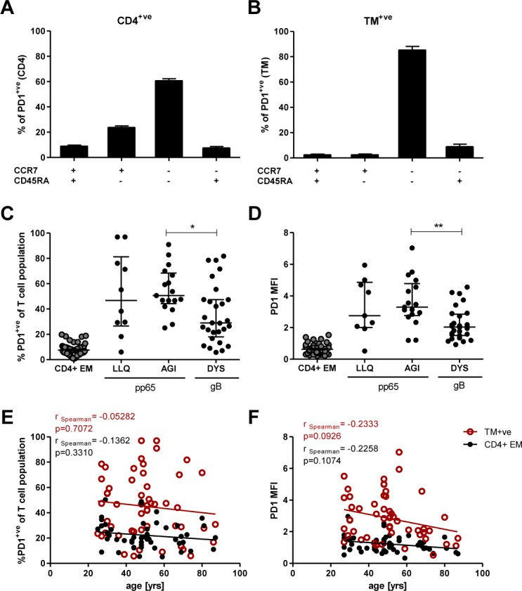 Analysis of inhibitory molecule PD-1 on CMV-specific T cells. PBMCs were stained with LIVE/DEAD fixeable dye, followed by HLA class II tetramer, before staining to detect surface molecules. (A) Percentage of PD-1+ cells within T cell memory subsets defined by co-expression of CCR7 and CD45RA for the total CD4+ population (n = 53). (B) Percentage of PD-1+ cells within those subsets for the TM+ cells (n = 53). Columns represent medians with IQR. (C) The frequency of PD-1+ cells within the CD4+EM T cell subset, LLQ-, AGI- and DYS-specific T cell populations. (D) MFI of PD-1 expression on CD4+EM T cells as well as LLQ-, AGI- and DYS-specific T cells. Error bars indicate medians and IQR. p-values: * p = 0.01–0.05, ** p = 0.001–0.01. Kruskal-Wallis test was performed with Dunn's multiple comparison in GraphPad Prism5 to derive p-values (C and D). (E) The proportion of TM+ cells and CD4+EM cells expressing PD-1 in relation to donor age. (F) Median fluorescence intensity (MFI) of PD-1 expression on TM+ cells and CD4+EM cells correlated with donor age. Spearman's rank correlation was used to analyse the strength of associations between variables (D and E).