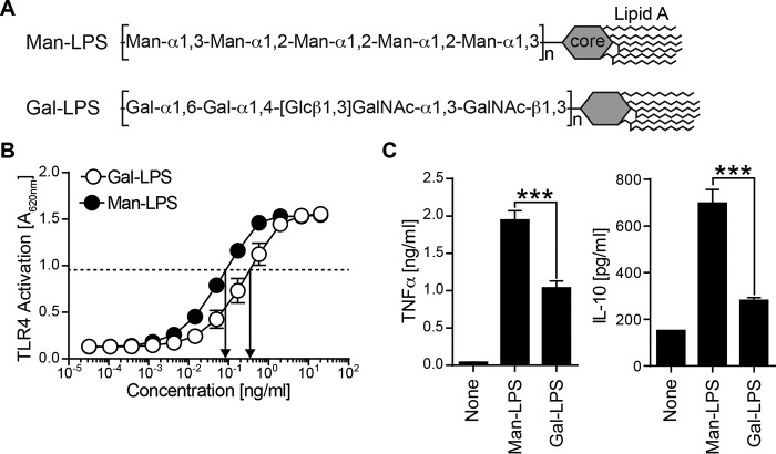 Comparison of BM-DC response to Man and Gal-LPS. A , two LPS used in this study are shown. Man-LPS from H. alvei PCM 1223 has a mannosylated repeating unit, whereas Gal-LPS from S. enterica O66 has a galactosylated repeat. B , HEK293 cells stably transfected with TLR4-MD2 were cultured in the presence of LPS. The TLR4 activation was monitored by measuring alkaline phosphatase activity using the substrate. C , mouse BM-DCs were stimulated with 1 μg/ml Man-LPS or 4 μg/ml Gal-LPS for 7 h. The amount of <t>TNFα</t> and IL-10 in the culture supernatant was analyzed by ELISA. Data are representative of three independent experiments with similar results. Error bars , S.D. Statistical analyses were performed by one-way ANOVA followed by Tukey's test. ***, p