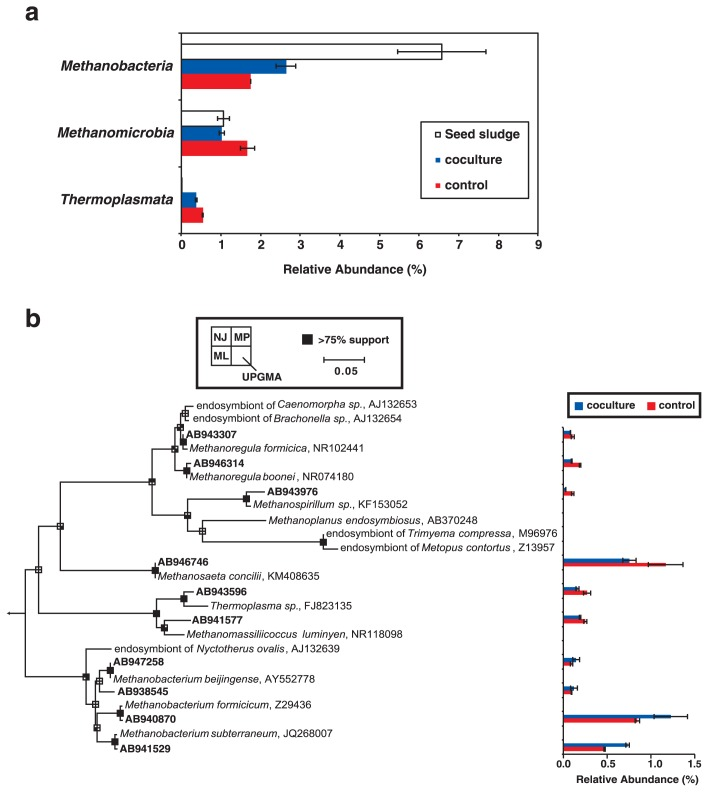 Taxonomic classification of archaeal communities in anaerobic granular sludge collected after 171 d of operation of an up-flow anaerobic sludge blanket (UASB) reactor. (a) Abundance of 16S rRNA gene sequences from each archaeal class. Coculture and control: UASB reactors with and without Metopus and Caenomorpha ciliates, respectively. (b) A 16S rRNA-based neighbor-joining (NJ) tree showing the phylogenetic affiliations of archaeal operational taxonomic units (OTUs) in the UASB reactors. Boldface indicates OTUs found in the present study. The scale bar represents the substitution of 5% of bases. Branching points that support probability > 75% in the bootstrap analyses (based on 1,000 replicates, estimated using the NJ method, maximum likelihood method [ML], maximum parsimony method [MP], and unweighted pair group method with an arithmetic mean [UPGMA]) are shown as black squares. The abundance of sequence reads that are affiliated with each OTU is shown in the graph on the right.