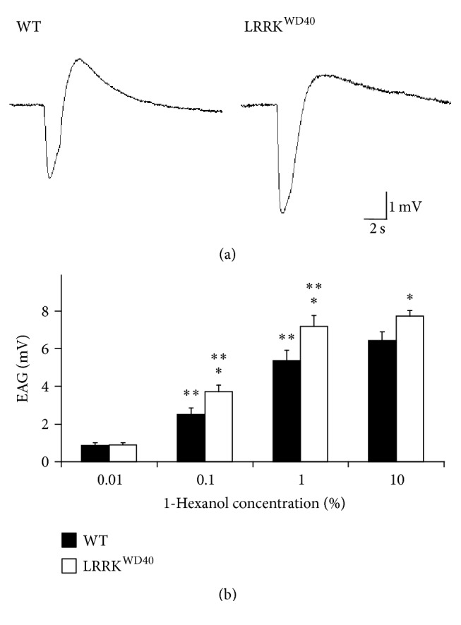 Electroantennogram (EAG) responses to 1-hexanol. Sample EAG recordings (a) and EAG amplitude values (b) elicited by stimulation with the different concentrations of 1-hexanol (0.01, 0.1, 1, and 10% v/v) in male antennae of WT and LRRK WD40 mutant flies. Mean values + SEM from 24–26 antennae for each stimulus concentration and insect sample. ∗ and ∗∗ indicate significant differences ( P
