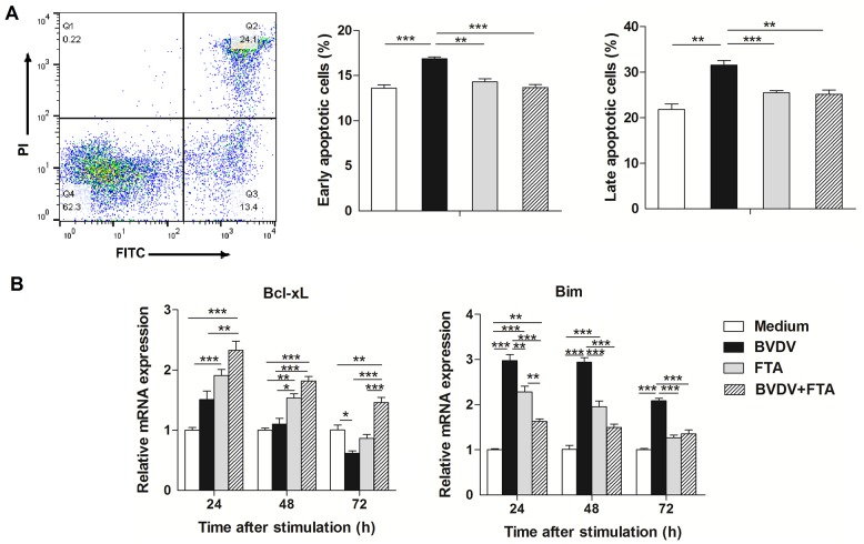 Effect of FTA on apoptosis of PBMCs infected with BVDV. PBMCs were collected from the indicated cultures at 24 h after BVDV challenge. (A) Representative two-dimensional scatter plots of annexin V versus propidium iodide, the percentage of early apoptotic cells and the percentage of late apoptotic cells. (B) Relative mRNA expression of Bcl-xL and Bim in bovine PBMCs after simulation. Data are presented as means ± SEM of three independent experiments. * P