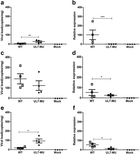 The UL7-MU viral strain exhibits attenuated phenotypes in a latent mouse infection model compared with the WT strain. a BALB/c mice were infected with WT HSV-1, UL7-MU or PBS via the foot pad at a dose of 5x10 3 /10 μl per mouse. The viral load was detected in the CNS of mice challenged with WT (open boxes), UL7-MU (filled circles) or PBS (filled triangles) by absolute real-time RT-PCR. Viral copy numbers were quantified according to the HSV-1 DNA standard pGM-T UL30 plasmid. b The levels of LAT expression in the CNS of mice challenged with WT (open boxes), UL7-MU (filled circles) or PBS (filled triangles), as determined by relative real-time RT-PCR. The graphic indicates the fold change of RNA levels in virus-infected mice compared to PBS-injected mice. The mouse housekeeping gene GAPDH was used to normalize quantities in mouse tissue. Relative quantification was performed by the comparative Ct method (△△Ct) using RNA from PBS mice as a calibrator. c Viral load detection in the spinal cord of mice challenged with WT (open boxes), UL7-MU (filled circles) or PBS (filled triangles). d The levels of LAT expression in the spinal cord of mice challenged with WT (open boxes), UL7-MU (filled circles) or PBS (filled triangles). e Viral load detection in the trigeminal nerve of mice challenged with WT (open boxes), UL7-MU (filled circles) or PBS (filled triangles). f The levels of LAT expression in the trigeminal nerves of mice challenged with WT (open boxes), UL7-MU (filled circles) or PBS (filled triangles). Data are shown as the means ± SD (experiments done once in triplicate). ∗∗∗ P