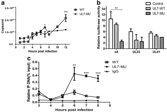 UL7 protein is involved in regulating the transcriptional activation of the HSV-1 α-4 gene. a Comparison of α-4 transcriptional efficiencies during the proliferetion of UL7-MU (filled circles) and WT viral strains (open boxes). Gene expression levels were detected using absolute real-time RT-PCR. Gene copy numbers were quantified according to the gene RNA standard. b HEK293T cells were co-transfected with pGL-α-4, pGL-UL23 or pGL-UL41 and UL7-WT, UL7-MU or control plasmid for 36 h before luciferase activities were quantified. Data are shown as means ± SD. ∗∗ P