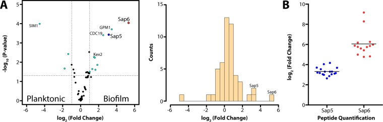 Label-free quantitation of proteins identified by shotgun proteomic analysis in conditioned medium from C. albicans cultures grown under biofilm and planktonic conditions. (A, left) Volcano plot depicting the log 2 -fold change in protein abundance (reported as biofilm/planktonic), demonstrating a significant increase in Sap5 and Sap6 levels under biofilm conditions with a log 2 -fold change of 3.1 for Sap5 ( P =3.7 × 10 −4 ) and a log 2 -fold change of 5.3 for Sap6 ( P = 9.1 × 10 −5 ). (A, right) Corresponding histogram showing the relative distribution of proteins identified. (B) Comparison of relative Sap5 and Sap6 peptide levels under biofilm and planktonic conditions with mean log 2 -fold changes indicated. Each data point represents quantification of a unique tryptic peptide for Sap5 or Sap6. Mean values of triplicate samples are reported. Supporting proteomic data are provided in Data Set S1 in the supplemental material.