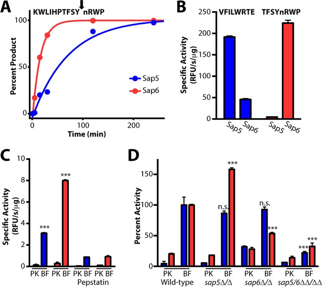 Sap5- and Sap6-cleavable fluorogenic peptide substrates distinguish between C. albicans under biofilm and planktonic growth conditions. (A) Fluorogenic substrates were developed on the basis of Sap5 and Sap6 cleavages from the MSP-MS peptide library. An example MS-based time course is provided showing Sap6-favored cleavage of KWLIHPTFSYnRWP, one substrate within a 25-member peptide sublibrary. Complete hydrolysis of the parent substrate and cleavage at a single site allowed for the calculation of k cat / K m values of 4.4 × 10 4 M −1 s −1 (Sap5) and 2.0 × 10 5 M −1 s −1 (Sap6). Cleavage time courses for the remaining peptides used in sequence selection are provided in Fig. S6 in the supplemental material. (B) Activity (relative fluorescence units [RFU] per second per microgram) of the internally quenched fluorogenic substrates VFILWRTE (blue bars) and TFSYnRWP (red bars) against recombinantly produced Sap5 and Sap6. (C) Both VFILWRTE and TFSYnRWP displayed significantly higher activity (***, P