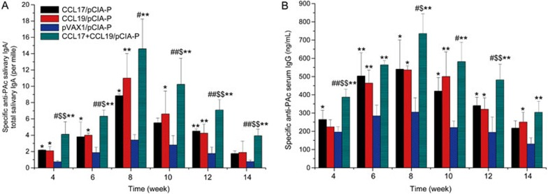 Salivary PAc-specific IgA and serum PAc-specific IgG antibody levels in mice immunized intranasally with pCIA-P in combination with pCCL17/VAX, pCCL19/VAX, pCCL17/VAX plus pCCL19/VAX, or pVAX1. Saliva and serum samples were collected at 4, 6, 8, 10, 12, 14, and 16 weeks after the first immunization. The specific anti-PAc salivary IgA (A) and specific anti-PAc serum IgG (B) concentrations were determined by ELISA. The data are expressed as the mean±SD. n =5. * P