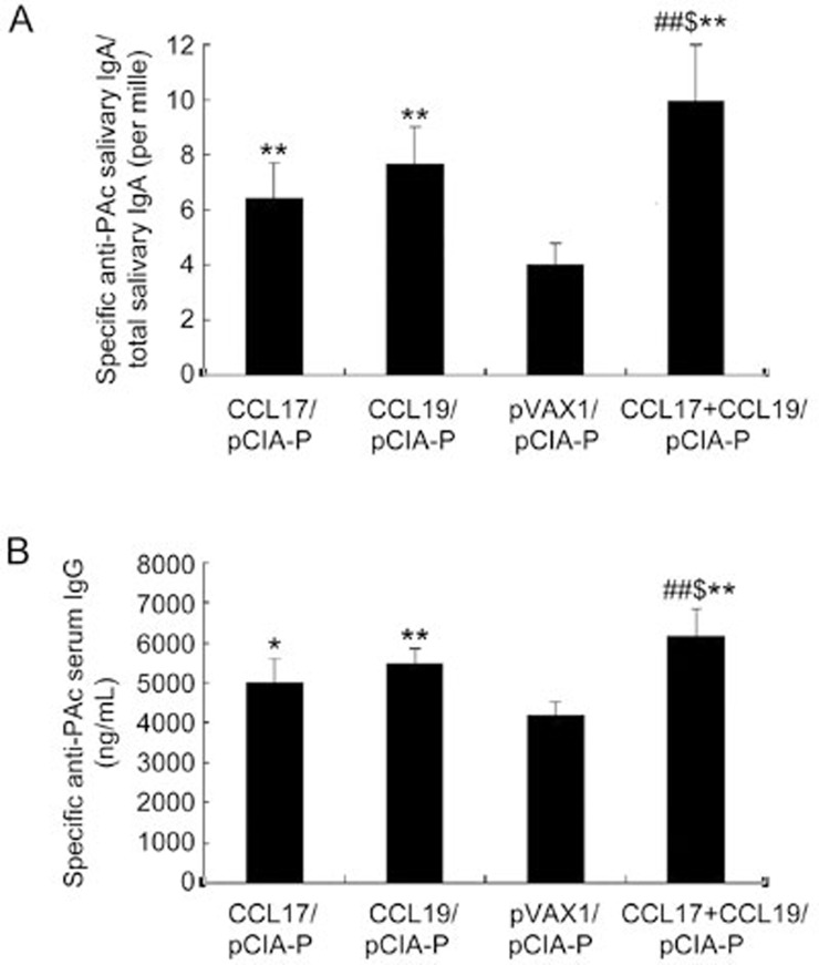 Salivary PAc-specific IgA and serum PAc-specific IgG antibody levels in rats immunized intranasally with pCIA-P in combination with pCCL17/VAX, pCCL19/VAX, pCCL17/VAX plus pCCL19/VAX, or <t>pVAX1.</t> Saliva and serum samples were collected 52 days after the first immunization. The specific anti-PAc salivary IgA (A) and specific anti-PAc serum IgG (B) concentrations were determined by ELISA. The data are expressed as the mean±SD. n =5. * P