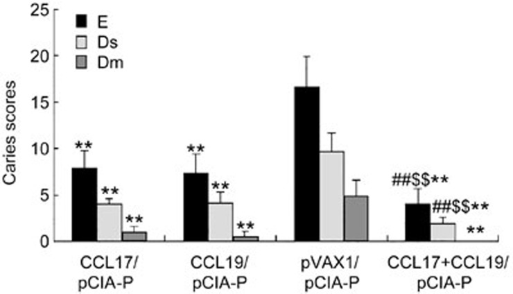 Caries scores of rats immunized intranasally with pCIA-P in combination with pCCL17/VAX, pCCL19/VAX, pCCL17/VAX plus pCCL19/VAX, or pVAX1. ** P