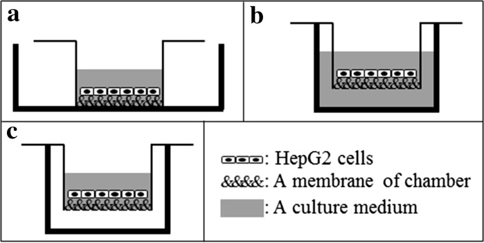 "Schematic illustration of three different culture methods of HepG2 cells using culture chambers. ""Liquid–solid interface"" culture method ( a ), ""liquid–liquid interface"" culture method ( b ), and ""liquid–gas interface"" culture method ( c ). Thin black line with the sequence of "" ""-symbols, gray zone and white zone represent a culture chamber, a culture medium and a humidified gas of 5 % CO 2 in air, respectively. Here, the sequence of "" ""-symbols represents a membrane of culture chambers; CVM of CVM chambers or a porous PET membrane of control Millicell chambers. Also, thick black line in ( a ) represents a plastic culture dish with a diameter of 60 mm and that in ( b ) and ( c ) does a well of 12 well-plastic culture plate"