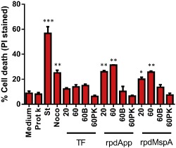 rpd A pp and rpd M sp A induce a dose‐dependent increase in human dendritic cell death. 1 × 10 5 human monocyte‐derived dendritic cells were stimulated with TF , rpd A pp or rpd M sp A at 20 or 60 μg ml −1 . To eliminate the effect of contaminating LPS in the protein preparations, 60 μg ml −1 heat‐inactivated (60 B ) or proteinase K ‐treated (60 PK ) proteins were used as negative controls. S taurosporine ( S t; 2 μM) and nocodazole ( N oco; 60 μg ml −1 ) were used as positive controls for cell death respectively. After exposure, cells were collected and stained with propidium iodide ( PI ) followed by flow cytometric analysis, and PI ‐positive cells (dead) were compared with unstained cells (live) for the determination of cell death. S tatistically significant differences, compared with medium alone, were assessed by one‐way ANOVA and S tudent's t ‐test: * P