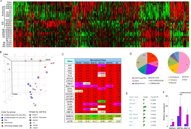 """DNA microarray data reveals hepatocyte-like differentiation of ammonia-treated cells. Results of DNA microarray analyses were combined and are presented as a heat map (A) and a principal component analysis (B). (C) Clipped representation from normalized microarray data showing hepatocyte related genes (upper) and control genes (lower). (D) Cell-type specificity of highly-expressed genes in ammonia-treated cells. Cell-type was annotated using GENATLAS (Paris Descartes University; http://genatlas.medecine.univ-paris5.fr/google/gene.php# ). Left; """"LIVER"""" indicates gene with high or predominant expression in organ(s) including the liver. """"LIVER (specific)"""" indicates gene with high liver specific expression. """"NON LIVER"""" indicates genes with high expression levels in organs other than the liver. """"NO EXPRESSION"""" indicates genes without high expression. """"UBIQUITOUS"""" indicates genes with ubiquitous expression (including liver expression). """"UNKNOWN"""" indicates genes with no expression data. Right; breakdown of """"NON LIVER"""". (E) The top eight factors returned from TRANSFAC analysis of ammonia-treated cells. (F) Quantitative PCR analysis of HNF4A , HNF-3beta ( HNF3b ), and HNF-1alpha ( HNF1A ), gene expression levels in H1 ES cells. Each bar represents mean and SD (n = 3). Values are fold-change relative to the value of HNF4A in undifferentiated cells. *P"""