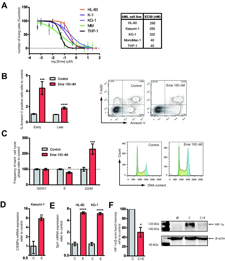 Emetine treatment reduced cell viability, induced apoptosis, prompted AML cells towards differentiation and downregulated HIF-1α A. HL-60, KG-1, MonoMac-1 (MM), Kasumi-1 (K-1) and THP-1 AML cell lines were treated for 24 h at different concentrations of emetine (μM). Each point represents the mean value of a biological triplicate and error bars represent SEM. Y-axis: number of live cells relative to vehicle-treated control as assessed by flow cytometry (correct FSC-SSC profile and 7-AAD − Hoechst low ). The EC50 is indicated in the nM range. B. MonoMac-1 and Kasumi-1 cell lines were treated with 150 nM emetine (red) or with vehicle control (light grey) for 24 h. Annexin-V staining was measured by flow cytometry. Data from both cell lines are presented combined ( n = 6 for each line) (left panel). Y-axis: relative frequency of early and late apoptotic cells. Early apoptotic: Annexin V + , 7-AAD − ; late apoptotic: Annexin V + , 7-AAD + . Representative flow cytometry plot of vehicle-treated or emetine-treated MM (right panel). C. HL-60, KG-1, MonoMac-1 and Kasumi-1 cells were treated with 150 nM emetine (red) for 24 h or vehicle control (light grey) and cell cycle was analyzed by flow cytometry. Relative frequency of G0/G1, S and G2/M phases is presented (left panel). Bars represent the mean value of all AML cell lines ( n = 6 for each cell line) and error bars represent SEM. Representative DNA content flow profile of control and emetine-treated KG-1 cells (right panel). Green represents G0/G1 phase; yellow, S-phase; blue, G2/M. HL-60, KG-1 and Kasumi-1 cells were treated with 150 nM emetine (E, red) for 24 h or with vehicle control (C, light grey). D. and E. C/EBPα (K-1) and PU.1 (HL-60, KG-1) mRNA levels are represented in K-1 and HL-60 and KG-1 cell lines upon treatment with emetine (E) compared to control (C). F . HL-60 and KG-1 cells were treated for 24 h with 50 μM CoCl 2 (C), 50 μM CoCl 2 plus 150 nM emetine (C+E) and vehicle control (Ø) [ 34 ]. HIF-1α was det