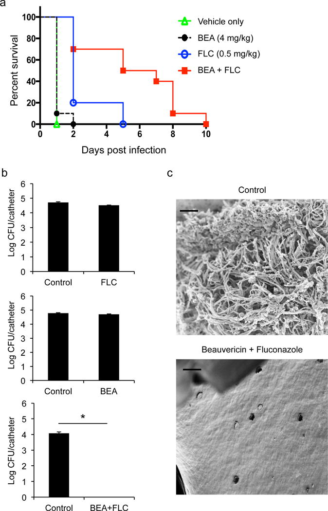 The combination of beauvericin and fluconazole provides a powerful therapeutic strategy ( a ) Beauvericin enhances fluconazole efficacy in a mouse model of C. albicans disseminated infection. Mice were infected with C. albicans (SC5314) and treated with vehicle, beauvericin, fluconazole, or the combination. Even with a high C. albicans inoculum, the combination of beauvericin and fluconazole significantly enhanced survival relative to either treatment alone. Each group consisted of 10 female BALB/c mice. Log-rank (Mantel-Cox) test: vehicle vs. beauvericin: P =0.3173, vehicle vs. fluconazole: P