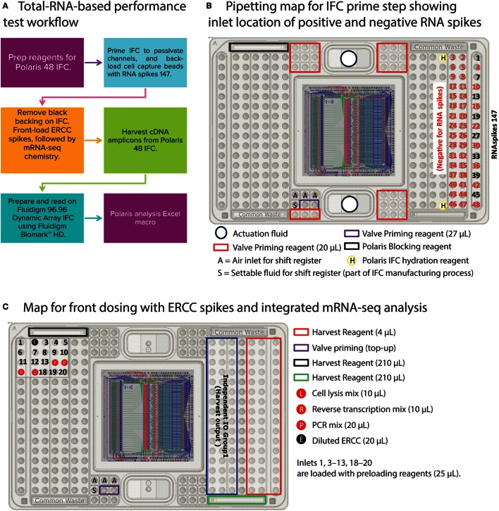 <t>Total-RNA-based</t> performance test (two-step) workflow and pipetting map . (A) Workflow to prime Polaris IFC with beads, back-load them with RNAspikes 147, simulate front dosing with diluted ERCC <t>spikes,</t> and generate cDNA using mRNA-seq chemistry. The cDNA amplicons from Polaris IFC were analyzed on the Fluidigm M96.96 IFC using 85 qPCR assays for specific genes, 8 assays for ERCC RNA spikes, and 3 assays for RNAspikes 147. (B) Pipetting map for IFC prime step. During prime step, RNAspikes 147 are back-loaded to 8 specific inlets with cell capture beads. (C) Pipetting map for front-dosing simulation with ERCC RNA spikes, followed by mRNA-seq chemistry.