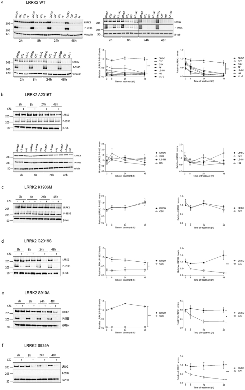 LRRK2 kinase inhibition reduces LRRK2 protein levels. SH-SY5Y overexpressing 3flag-LRRK2 WT ( a ) A2016T ( b ) K1906M ( c ) G2019S ( d ) S910A ( e ) or S935A ( f ) were treated according to different time schedules with LRRK2-IN1 (L2-IN1, 1 μM), CZC-25146 (CZC, 200 nM), PF-06447475 (PF, 150 nM), GSK2578215A (GSK, 1 μM), MLi-2 (10 nM) or HG 10-102-01 (HG, 1 μM) or DMSO. Cell lysates were analyzed with immunoblotting using FlagM2 antibody for LRRK2 detection, anti-LRRK2 P-S935 and anti-α- or β-tubulin, anti-GAPDH or anti-vinculin for equal loading. Shown are representative blots. Graphs show the quantification of blots representing the ratio of phosphorylation at S935 over total LRRK2 signal or total LRRK2 over housekeeping protein signal. Error bars indicate s.e.m. with N ≥ 3. Statistical significance was tested using a two-way ANOVA test with Bonferroni post-tests. ***p
