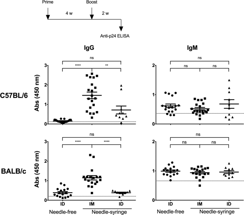Suboptimal IgG, but not the IgM, antibody response following the NF-ID immunization. Groups of mice, C57BL/6 or BALB/c, were immunized with the pCMV-Gag DNA vector through the NF-ID, or needle-syringe IM or ID route. Each symbol represents an individual animal. The sera obtained 11 days following the booster immunization were diluted 100 and 500-fold for the measurement of IgG in C57BL/6 and BALB/c mice respectively. The IgM from both the strains of mice was measured in serum diluted 100-fold. The assay employed secondary antibodies conjugated to HRP specific to IgM or IgG isotypes. The mean absorbance value of the group and the SEM are shown. The dotted line represents the cut-off value defined as two times the mean absorbance value of the control group of four animals immunized with the null vector. The data of the NF-ID and IM groups were obtained from three independent experiments containing 4–6 mice per group. The data of the needle-syringe ID group were obtained from two independent experiments containing 4 or 6 animals per group. The one-way ANOVA was used for statistical comparison (****p