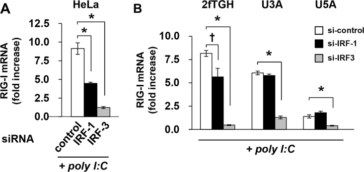 STAT1- and type I IFN-independent RIG-I expression requires IRF3. HeLa (A), and 2fTGH, U3A, and U5A cells (B) were transfected with siRNA against IRF-1 or IRF-3 or control siRNA for 48 h and then transfected with poly I:C (100 ng) for 4 h. The expression levels of RIG-I were determined by quantitative RT-PCR. The means (±SD) of three experiments are shown; † P