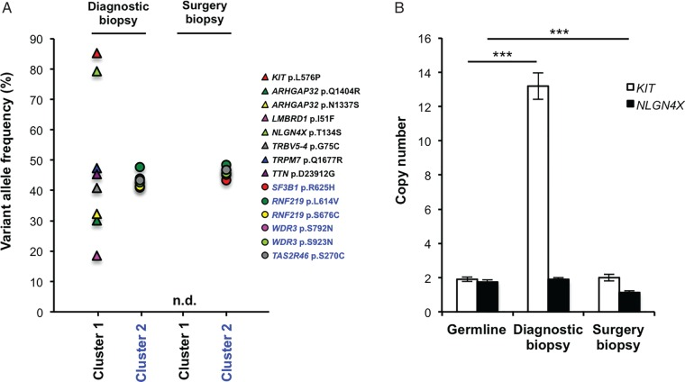 Analysis of the primary tumour reveals tumour heterogeneity. (A) Single-nucleotide variations in chromosomal <t>DNA</t> from the diagnostic biopsy of the primary tumour and the radical surgery 2 months after the initial biopsy. n.d., not detected. (B) Copy number determination of KIT and NLGN4X in the diagnostic biopsy and in tissue from the subsequent surgical excision when compared with <t>germline</t> DNA by using droplet digital PCR. *** P