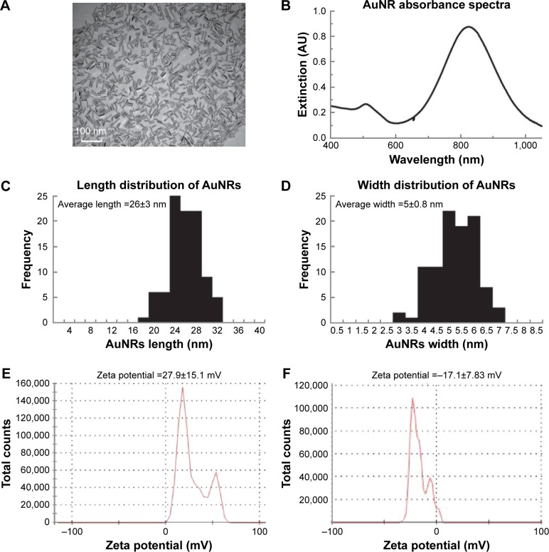 Characterization of PEGylated AuNRs (length 26±3 nm, width 5±0.8 nm). Notes: ( A ) TEM image with 100 nm scale bar. ( B ) UV–Vis absorbance spectra showing the SPR peaks of AuNRs. ( C ) Corresponding histograms of the lengths of the 100 AuNRs particles counted. ( D ) Corresponding histograms of the widths of the 100 AuNRs particles counted. ( E ) Zeta potential data of the as-synthesized rods. ( F ) Zeta potential data of PEGylated AuNRs. Abbreviations: AuNRs, gold nanorods; TEM, transmission electron microscope; SPR, surface plasmon resonance; UV–Vis, ulltraviolet–visible.