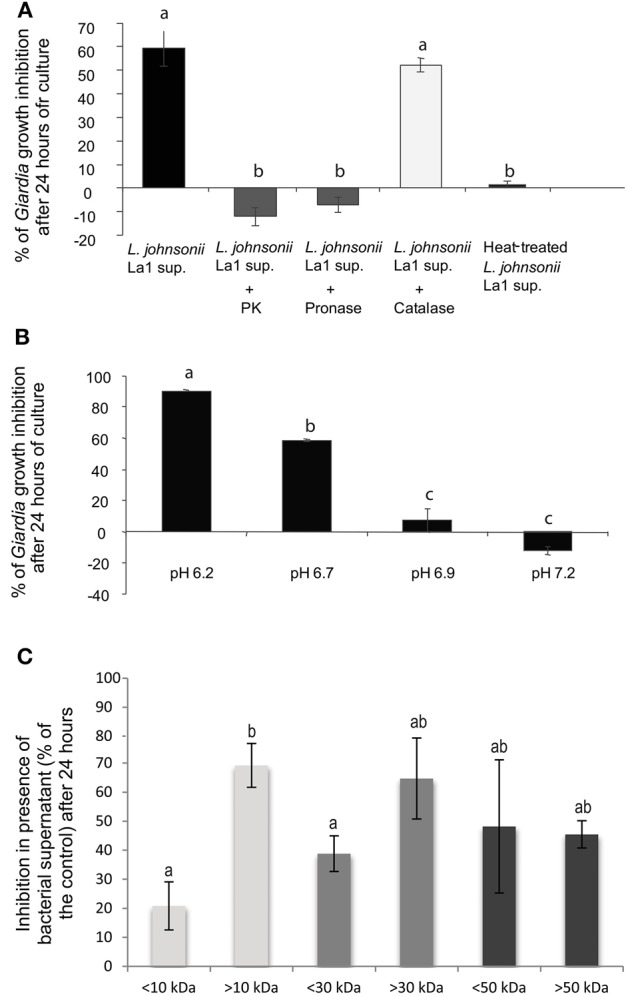 G. duodenalis  growth inhibition by  L. johnsonii  La1 supernatant is affected by supernatant incubation with proteases, heat-treatment and pH. (A)  Supernatant of  L. johnsonii  La1 was incubated for 6 h with 1 mg of immobilized proteases ( L. johnsonii  La1 supernatant: no protease treatment;  L. johnsonii  La1 supernatant + PK: treatment with proteinase K;  L. johnsonii  La1 supernatant + Pronase: treatment with pronase;  L. johnsonii  La1 supernatant + Catalase: treatment with catalase) or heated at 90°C for 10 min before  G. duodenalis  growth inhibition assay. Growth inhibition (%) was normalized according to matched control: lactic acid-adjusted MTYI medium incubated with protease-coupled beads or treated for 10 min at 90°C.  (B)  Supernatant from  L. johnsonii  La1 in MTYI medium was adjusted to pH 6.2, 6.7, 6.9, or 7.2 before  Giardia  growth inhibition assays. Growth inhibition (%) was normalized according to control, i.e., lactic acid-adjusted MTYI subsequently raised to pH 6.2, 6.7, 6.9, or 7.2. Values are the mean ± SD of three independent experiments.  (C)  Molecular weight determination of inhibitory compounds from  L. johnsonii  La1 supernatant. Supernatant from a culture of  L. johnsonii  La1 in KM-FCS was filtrated through 10, 30, or 50 kDa MW cut-off membranes. Acidified KM-FCS alone was processed similarly. Fractions above and under respective thresholds were assayed for  Giardia  growth inhibition in the presence of bile (0.5 g/L). Inhibition values (%) were normalized according to KM-FCS controls. Data are the mean ± SD of three independent experiments performed in triplicate. Letters indicate significant differences between treatments (Kruskal-Wallis,  p